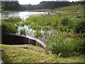 NU0702 : A well vegetated corner of Tumbleton Lake, Cragside by Stanley Howe