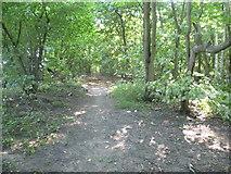 TQ1662 : Path in Sixty Acre Wood by Marathon