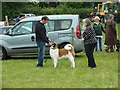 SJ1901 : Berriew Show - the dog show by Penny Mayes