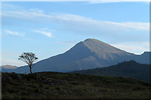 SH5752 : Lone tree on moorland near Rhyd-Ddu by Trevor Littlewood