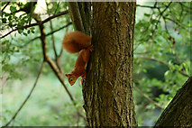SZ5885 : No Reward for Little Squirrel by Peter Trimming