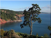 SX9265 : Tree and view, Babbacombe Downs by Derek Harper