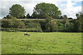 SP1270 : Railway embankment east of Tanworth by Robin Stott