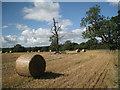 SP1270 : Ash tree in trouble in a wheatfield by Robin Stott