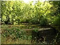 ST6376 : Artificial pond, Oldbury Stream by Derek Harper