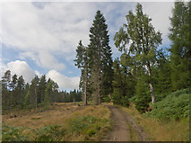 NH6271 : Start of forest track into the Novar Estate by Julian Paren