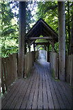 NU1913 : Alnwick Garden Treehouse Walkway by Peter Skynner