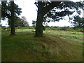 TQ4730 : The edge of Kings Standing Clump, Ashdown Forest by Marathon