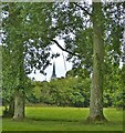 SU8403 : View through poplar avenue to Chichester Cathedral by Rob Farrow
