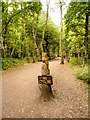 SK6268 : Path in Sherwood Forest by David Dixon