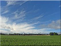 NH6454 : New crops emerging on the field beside Balnakyle Farmhouse by Julian Paren