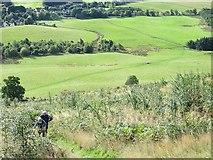 NN9901 : Path on Seamab Hill by Richard Webb