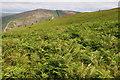 SN9664 : Bracken hillside above the Wye valley by Philip Halling