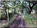 SJ5155 : The Sandstone Trail near Rawhead Farm by Jeff Buck