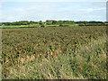TG1034 : Potato crop by Wood Farm, Edgefield by Evelyn Simak