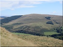 NN9901 : Woodland on Seamab Hill by Richard Webb