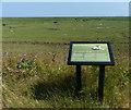 TF3638 : Marvellous marsh by Mat Fascione