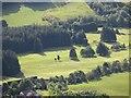 NN9900 : Muckhart Golf Club by Richard Webb