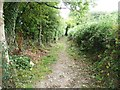 SO3201 : Public footpath to Jenny's Bushes by Christine Johnstone