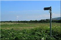 NT6578 : John Muir Way Dunbar by edward mcmaihin