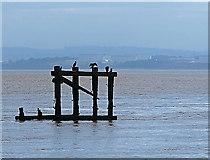 SJ3681 : Mersey estuary by Eastham Locks by William Starkey