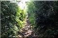 SJ5367 : The Sandstone Trail at Willington by Jeff Buck