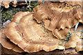 J3875 : Fungus, Belfast (2) by Albert Bridge