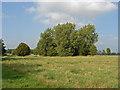 SU9574 : Windsor Great park by Alan Hunt