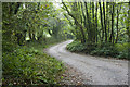 SW7746 : Lane to Binneys by Elizabeth Scott