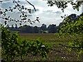 SP9107 : Beechwood farm and fields from Drayton Wood by Rob Farrow