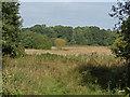 SU8563 : Disused farmland, Broadmoor by Alan Hunt