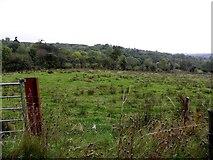 H1118 : Rushy ground, Ardmoneen by Kenneth  Allen