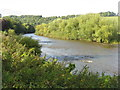 SO5916 : Looking down the River Wye by M J Richardson