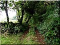 H1113 : A very overgrown lane, Callowhill by Kenneth  Allen