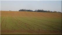 SJ8234 : Farmland north of Millmeece by N Chadwick