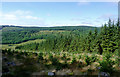 SN8156 : Tywi forest and Cwm Tywi, Powys by Roger  Kidd