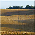 SU4581 : Stubble field with evening shadows by David Lally