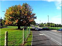 H4572 : Chestnut tree in autumn colours, Omagh by Kenneth  Allen