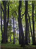 NS0964 : Lower Roseland Wood by William Starkey