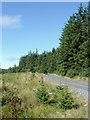 SN8155 : Forestry road in Coed Nantyrhwch, Powys by Roger  Kidd