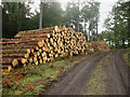 NU0536 : Large pile of logs in Shiellow Wood by Graham Robson