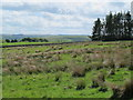 NY9398 : Moorland northwest of High Shaw by Mike Quinn