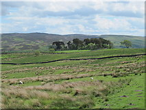 NY9398 : Moorland north of High Shaw by Mike Quinn