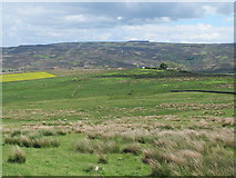 NY9398 : Rough pastures northwest of Herdlaw by Mike Quinn