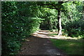 TQ4469 : LOOP, Chislehurst Common by N Chadwick