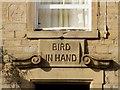 SD9311 : Bird In Hand (detail) by David Dixon