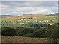 SN1631 : Forestry at Blaen-cleddau, Mynachlog-ddu by Dylan Moore
