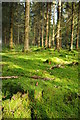 SO6110 : Moss cover forest floor by Philip Halling