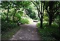 TQ4569 : LOOP, Chislehurst Common by N Chadwick