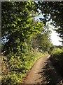 SX3661 : Lane near Penquite by Derek Harper